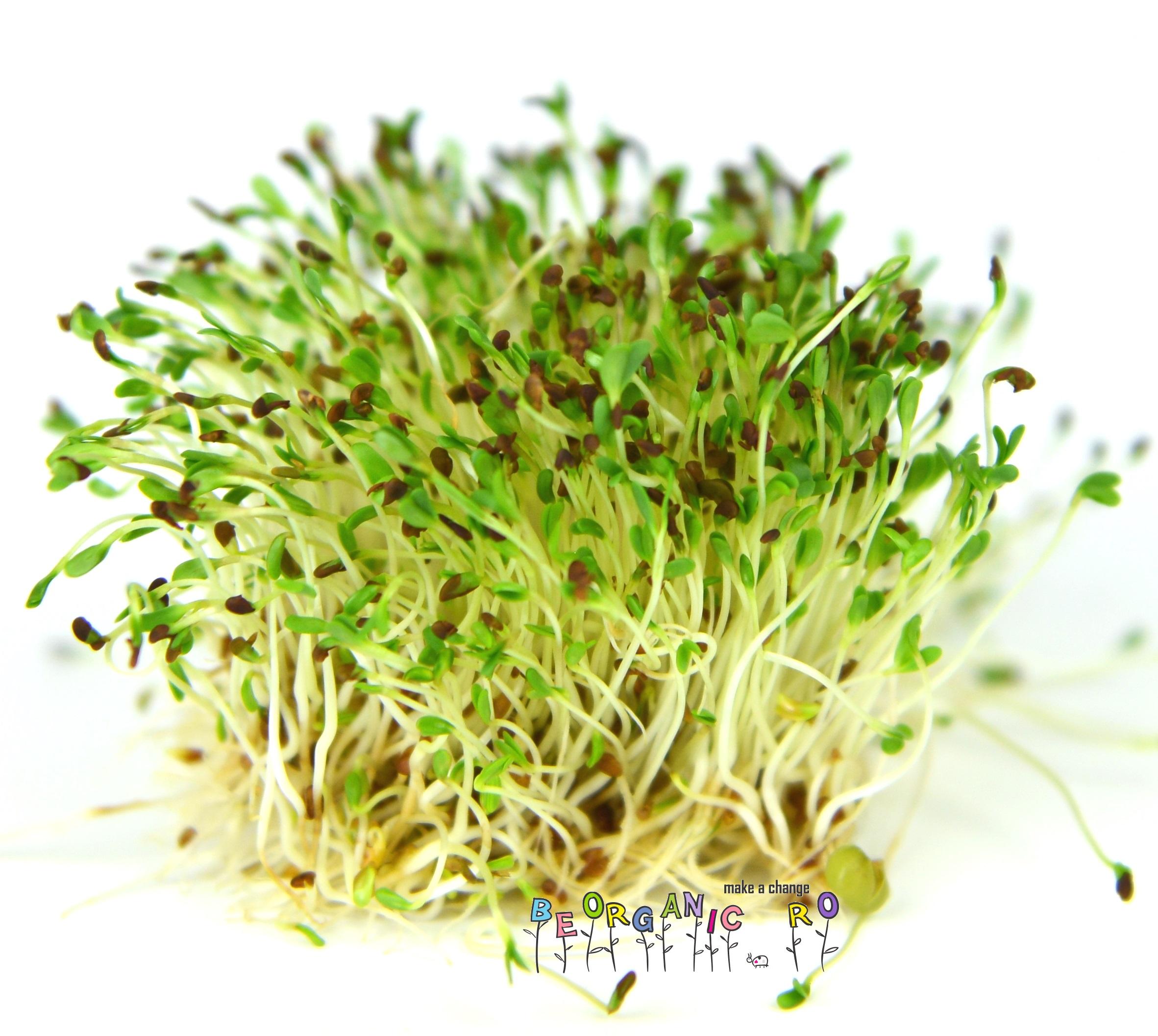 Sfaturi pentru o germinare usoara, fara batai de cap